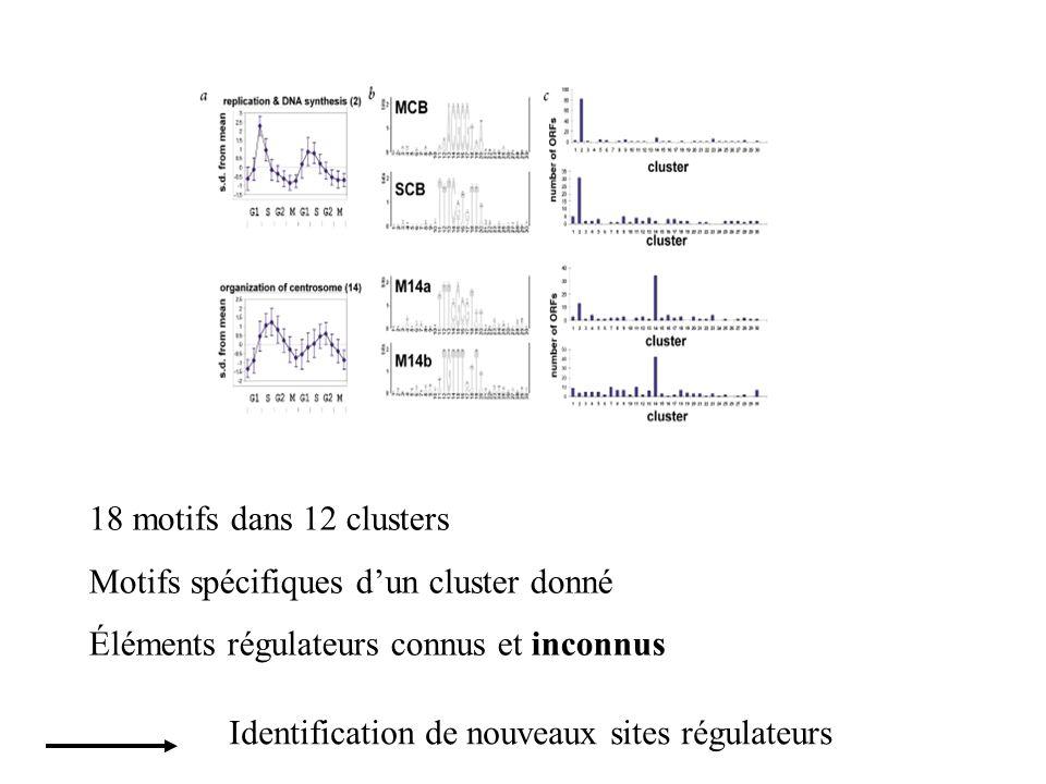 18 motifs dans 12 clusters Motifs spécifiques dun cluster donné Éléments régulateurs connus et inconnus Identification de nouveaux sites régulateurs