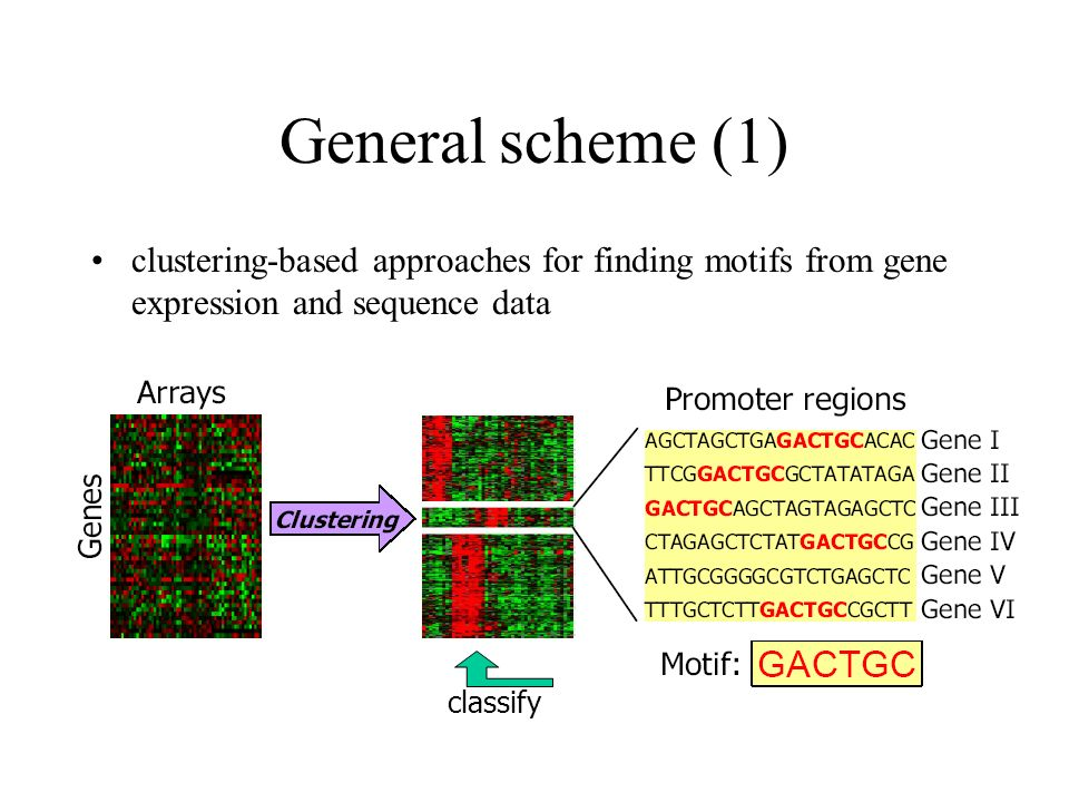 General scheme (1) clustering-based approaches for finding motifs from gene expression and sequence data classify