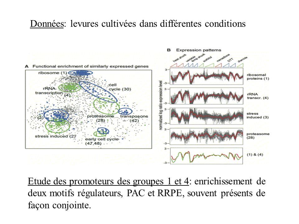 Données: levures cultivées dans différentes conditions Etude des promoteurs des groupes 1 et 4: enrichissement de deux motifs régulateurs, PAC et RRPE