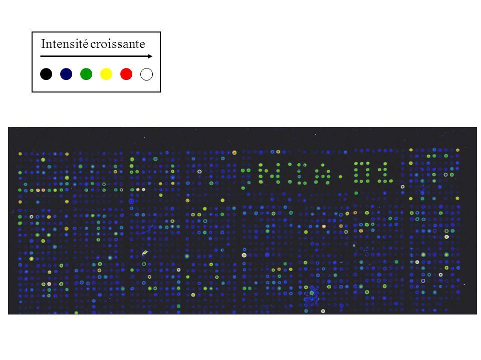 6 échantillons: A1, A2, A3, B1, B2, B3 Microarray comprenant 20 000 gènes échelle dexpression: 1- 10000 Mesures pour un gène X A1A2A3B1B2B3 253035555066 Test t: p = 0,01 Pour combien de gènes une telle valeur peut-elle être obtenue par hasard .