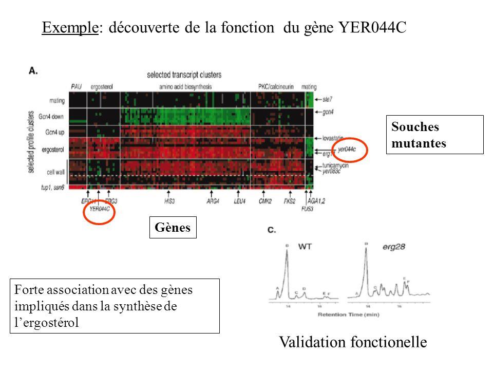 Exemple: découverte de la fonction du gène YER044C Gènes Souches mutantes Forte association avec des gènes impliqués dans la synthèse de lergostérol V