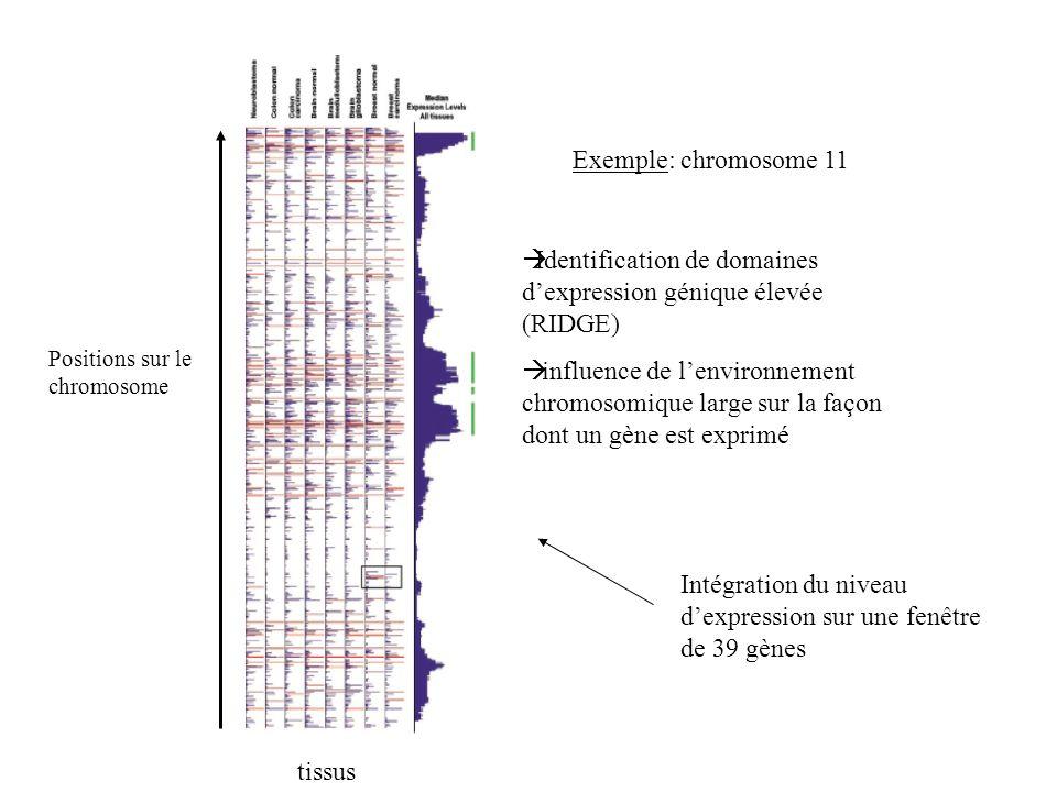 Exemple: chromosome 11 tissus Intégration du niveau dexpression sur une fenêtre de 39 gènes Positions sur le chromosome Identification de domaines dex