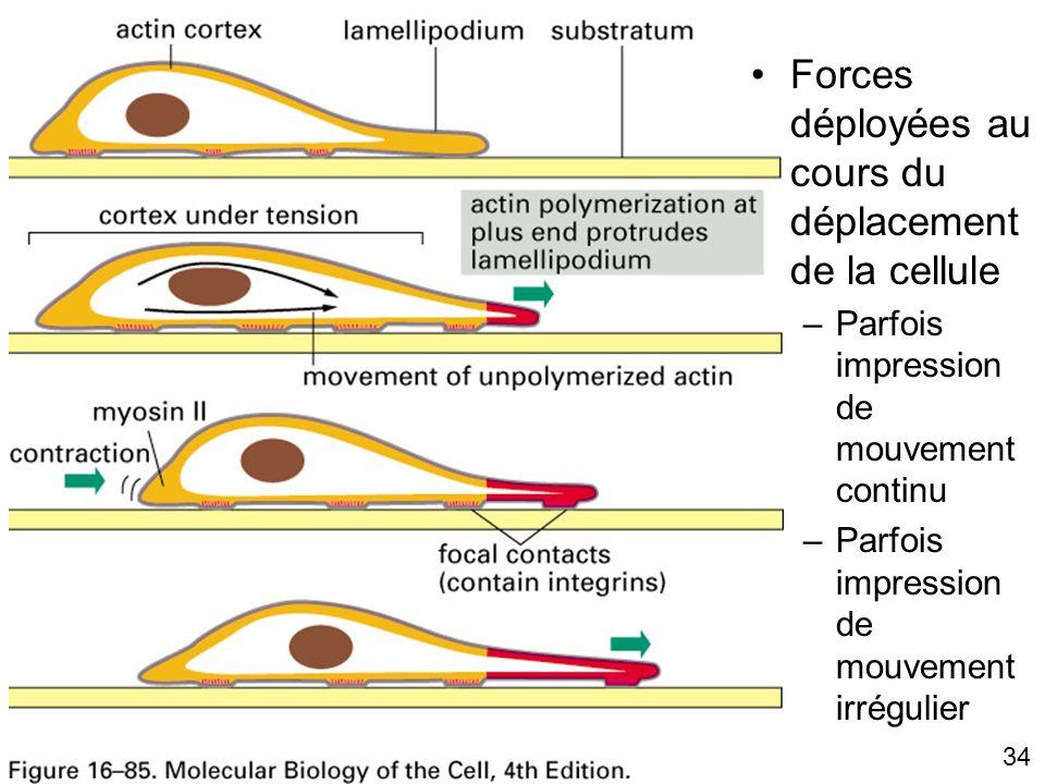 34 Fig 16-85 Forces déployées au cours du déplacement de la cellule –Parfois impression de mouvement continu –Parfois impression de mouvement irréguli