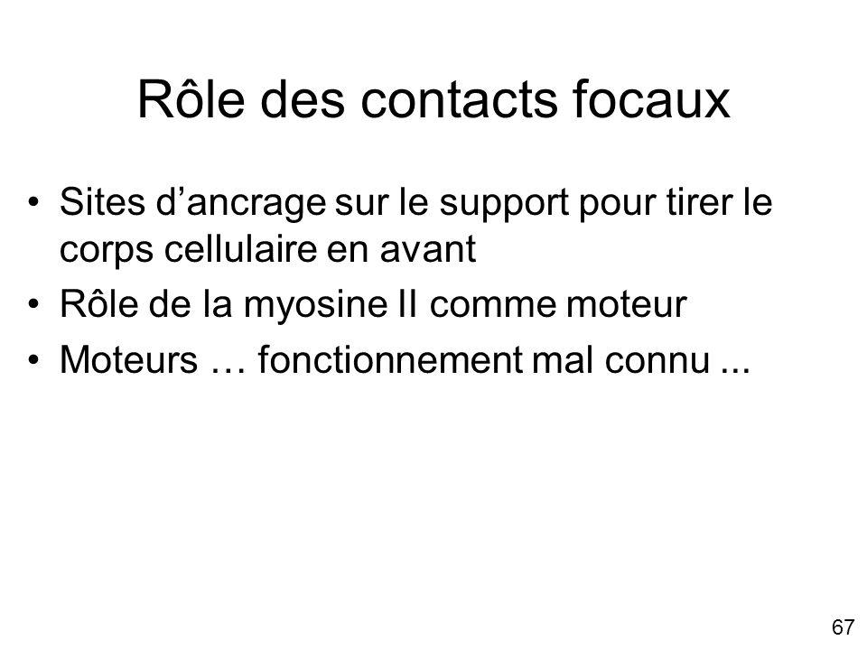 67 Rôle des contacts focaux Sites dancrage sur le support pour tirer le corps cellulaire en avant Rôle de la myosine II comme moteur Moteurs … fonctio