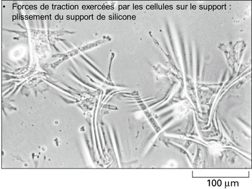 71 Fig 16-94 Forces de traction exercées par les cellules sur le support : plissement du support de silicone