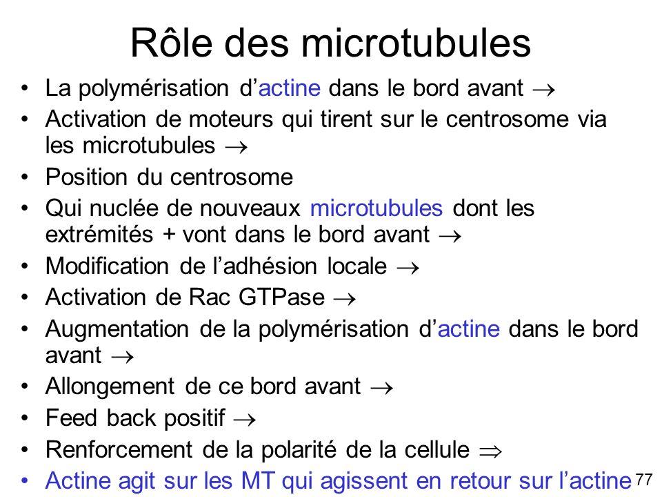 77 Rôle des microtubules La polymérisation dactine dans le bord avant Activation de moteurs qui tirent sur le centrosome via les microtubules Position