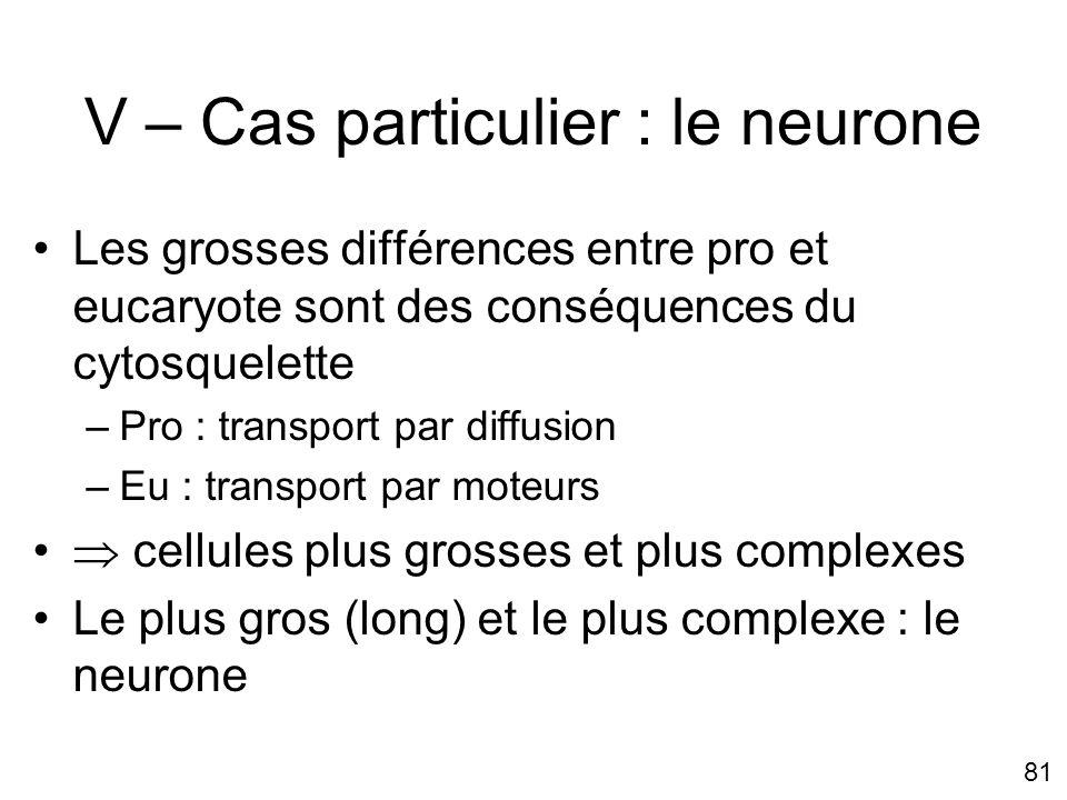 81 V – Cas particulier : le neurone Les grosses différences entre pro et eucaryote sont des conséquences du cytosquelette –Pro : transport par diffusi