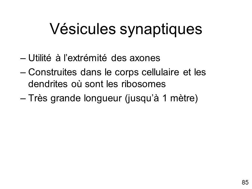 85 Vésicules synaptiques –Utilité à lextrémité des axones –Construites dans le corps cellulaire et les dendrites où sont les ribosomes –Très grande lo