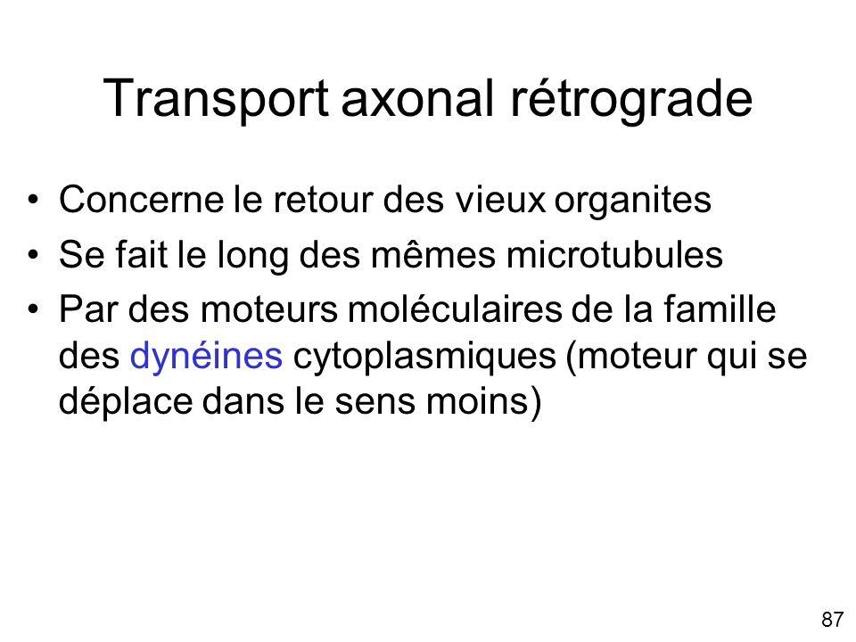 87 Transport axonal rétrograde Concerne le retour des vieux organites Se fait le long des mêmes microtubules Par des moteurs moléculaires de la famill