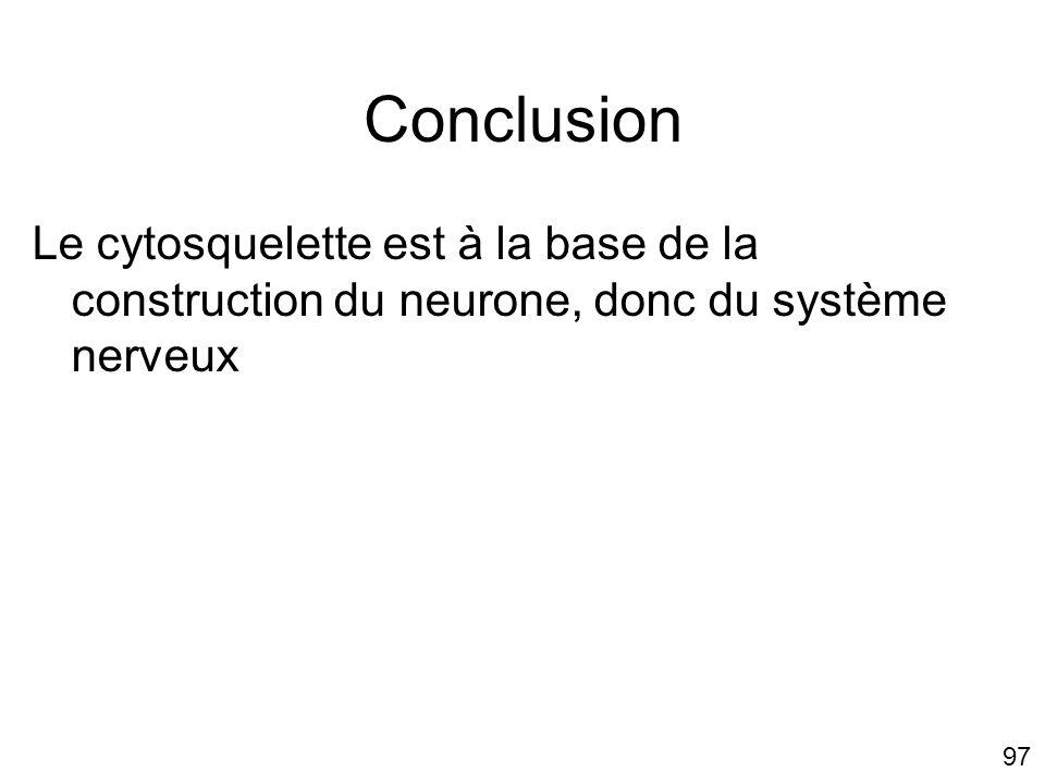 97 Conclusion Le cytosquelette est à la base de la construction du neurone, donc du système nerveux