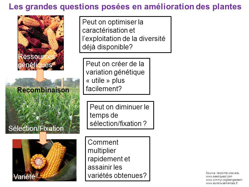 Les grandes questions posées en amélioration des plantes Source : teosinte.wisc.edu www.seedquest.com www.cimmyt.org/bangladesh www.euralis-semences.f