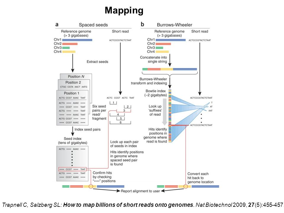 Mapping Trapnell C, Salzberg SL: How to map billions of short reads onto genomes.