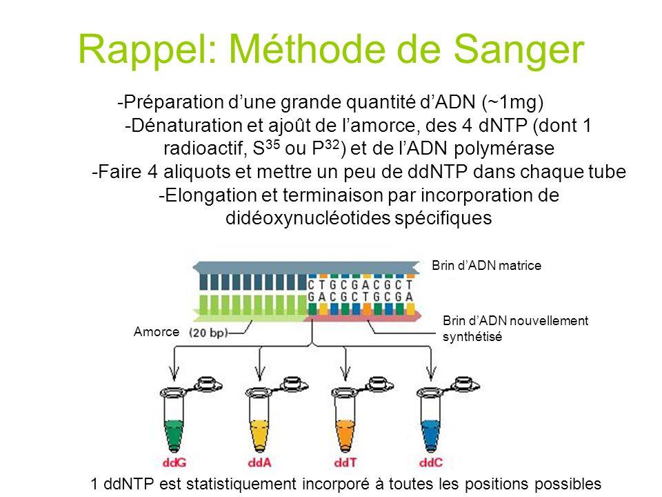 Rappel: Méthode de Sanger -Préparation dune grande quantité dADN (~1mg) -Dénaturation et ajoût de lamorce, des 4 dNTP (dont 1 radioactif, S 35 ou P 32