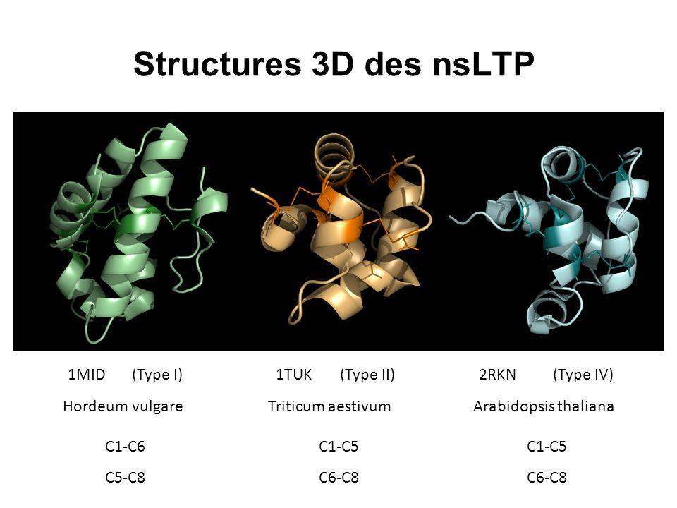 Structures 3D des nsLTP 1MID(Type I) Hordeum vulgare 1TUK(Type II) Triticum aestivum 2RKN(Type IV) Arabidopsis thaliana C1-C6 C5-C8 C1-C5 C6-C8 C1-C5