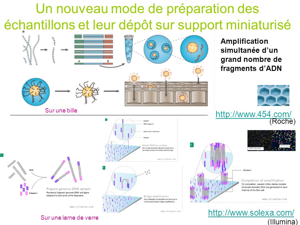 Modélisation 3D par homologie It is generally admitted that a reliable model can be obtain up from 25- 30% sequence identity between template and target