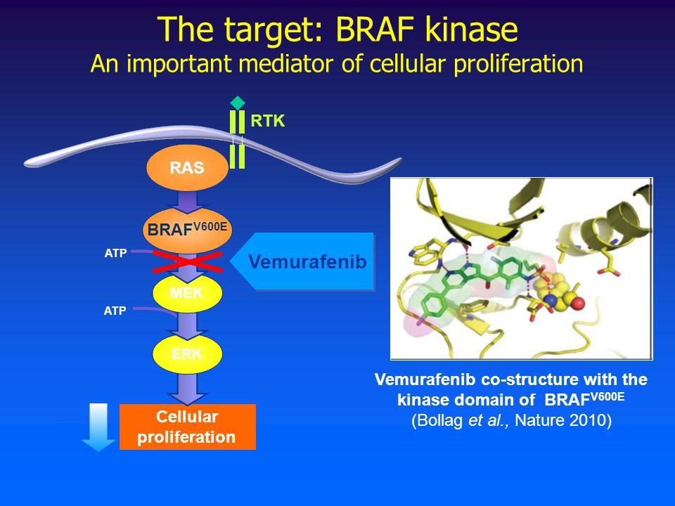 The target: BRAF kinase An important mediator of cellular proliferation Vemurafenib co-structure with the kinase domain of BRAF V600E (Bollag et al., Nature 2010) Cellular proliferation RTK Raf Vemurafenib ATP ERK MEK BRAF V600E RAS