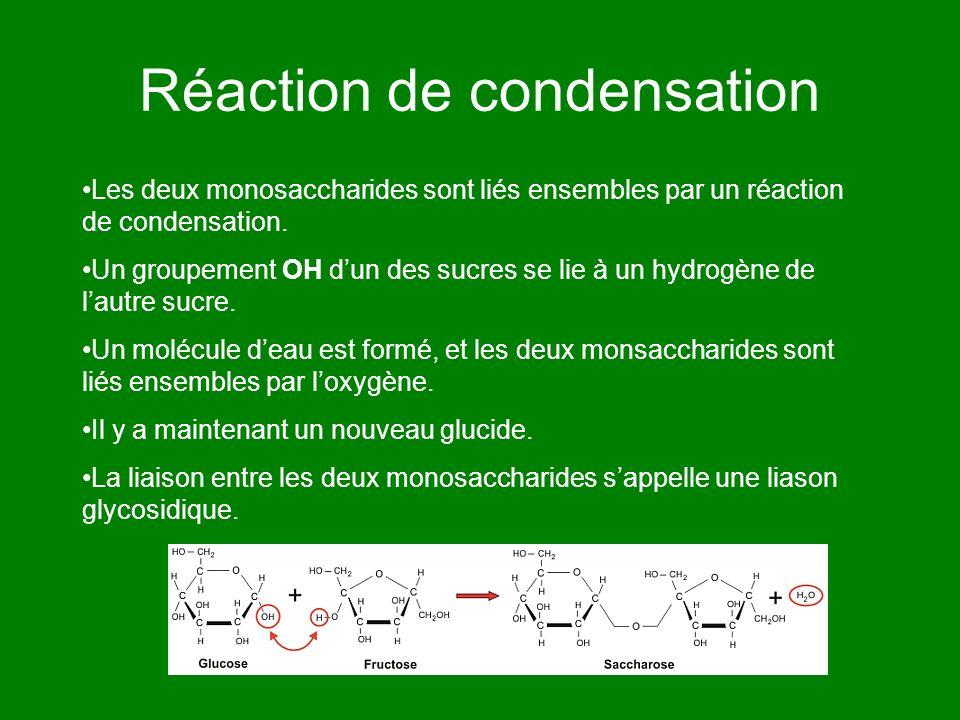 Réaction de condensation Les deux monosaccharides sont liés ensembles par un réaction de condensation. Un groupement OH dun des sucres se lie à un hyd