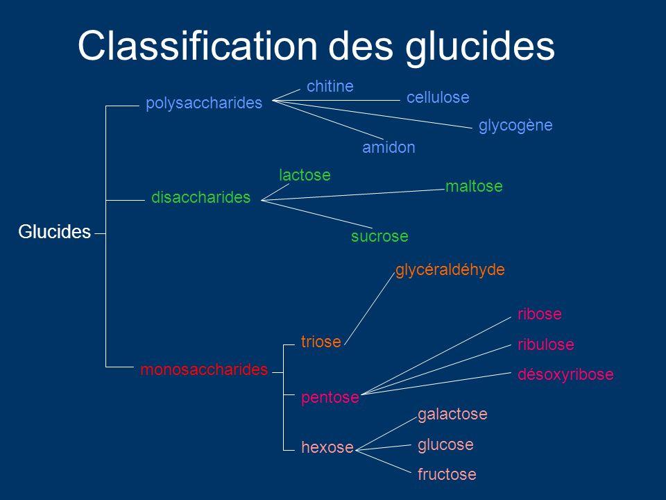 Glucides monosaccharides disaccharides polysaccharides triose pentose hexose chitine lactose sucrose maltose amidon cellulose glycogène glycéraldéhyde