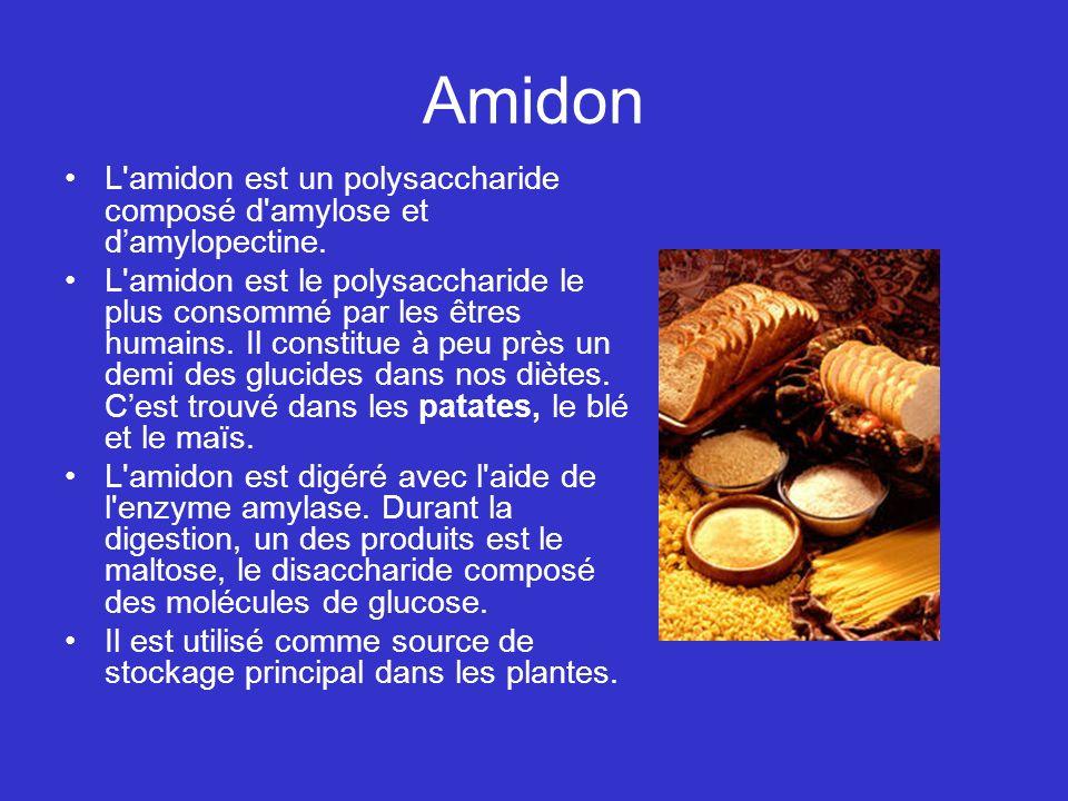 Amidon L'amidon est un polysaccharide composé d'amylose et damylopectine. L'amidon est le polysaccharide le plus consommé par les êtres humains. Il co