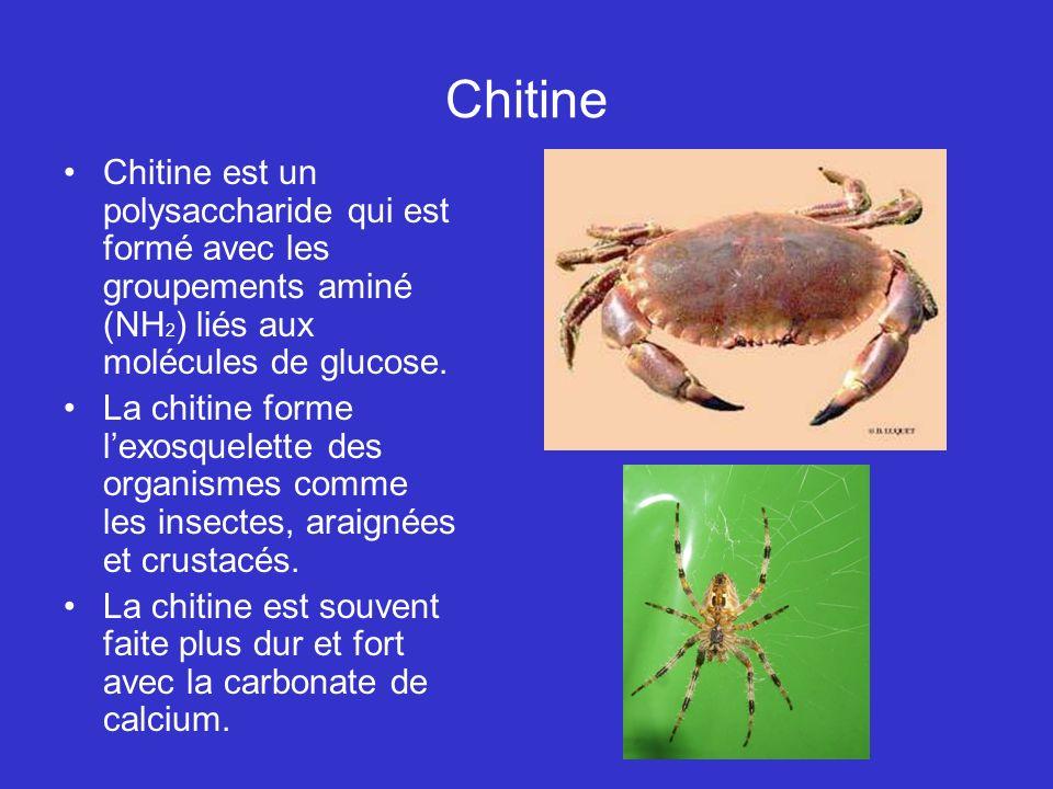 Chitine Chitine est un polysaccharide qui est formé avec les groupements aminé (NH 2 ) liés aux molécules de glucose. La chitine forme lexosquelette d