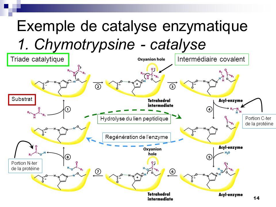 CHMI 2227 - E.R. Gauthier, Ph.D.14 Exemple de catalyse enzymatique 1. Chymotrypsine - catalyse Triade catalytique Substrat Portion C-ter de la protéin