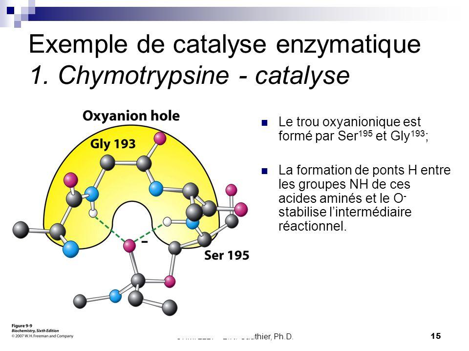 CHMI 2227 - E.R. Gauthier, Ph.D.15 Exemple de catalyse enzymatique 1. Chymotrypsine - catalyse Le trou oxyanionique est formé par Ser 195 et Gly 193 ;