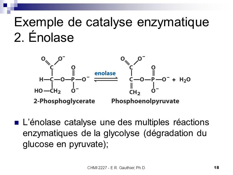 CHMI 2227 - E.R. Gauthier, Ph.D.18 Exemple de catalyse enzymatique 2. Énolase Lénolase catalyse une des multiples réactions enzymatiques de la glycoly