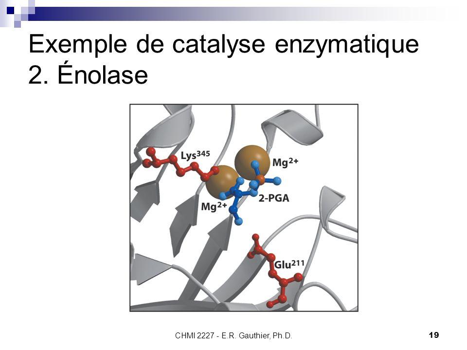 CHMI 2227 - E.R. Gauthier, Ph.D.19 Exemple de catalyse enzymatique 2. Énolase
