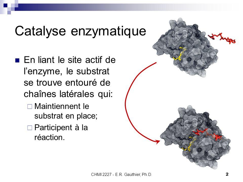 CHMI 2227 - E.R. Gauthier, Ph.D.2 Catalyse enzymatique En liant le site actif de lenzyme, le substrat se trouve entouré de chaînes latérales qui: Main