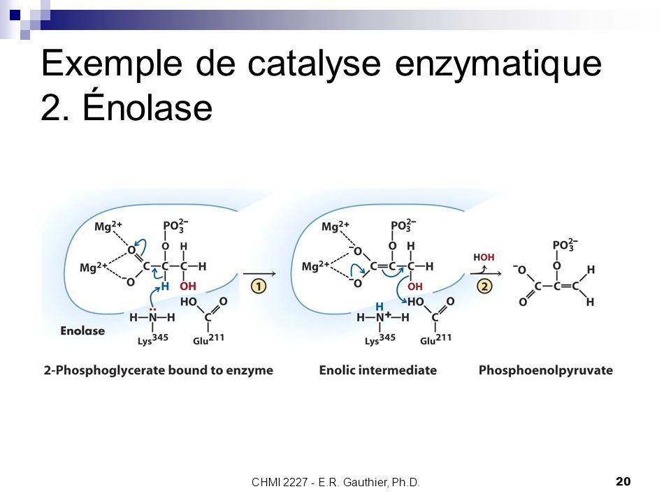 CHMI 2227 - E.R. Gauthier, Ph.D.20 Exemple de catalyse enzymatique 2. Énolase