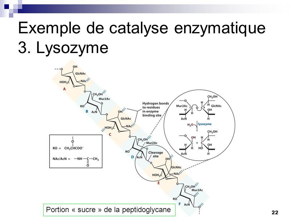 CHMI 2227 - E.R. Gauthier, Ph.D.22 Exemple de catalyse enzymatique 3. Lysozyme Portion « sucre » de la peptidoglycane