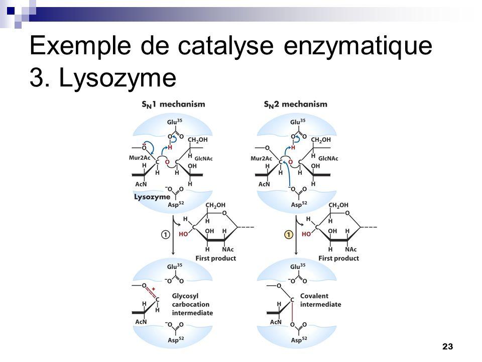 CHMI 2227 - E.R. Gauthier, Ph.D.23 Exemple de catalyse enzymatique 3. Lysozyme