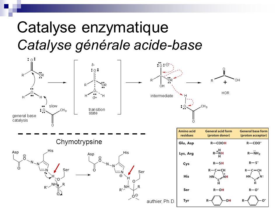 CHMI 2227 - E.R. Gauthier, Ph.D.4 Catalyse enzymatique Catalyse générale acide-base Chymotrypsine O OH R HOR + H