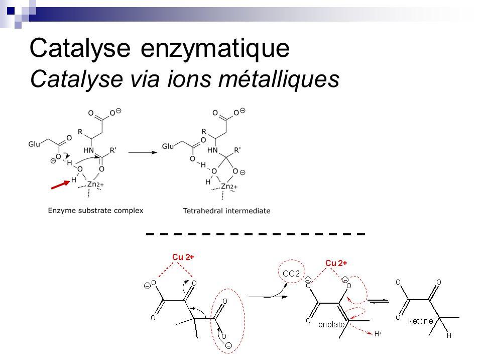 CHMI 2227 - E.R. Gauthier, Ph.D.5 Catalyse enzymatique Catalyse via ions métalliques H+H+