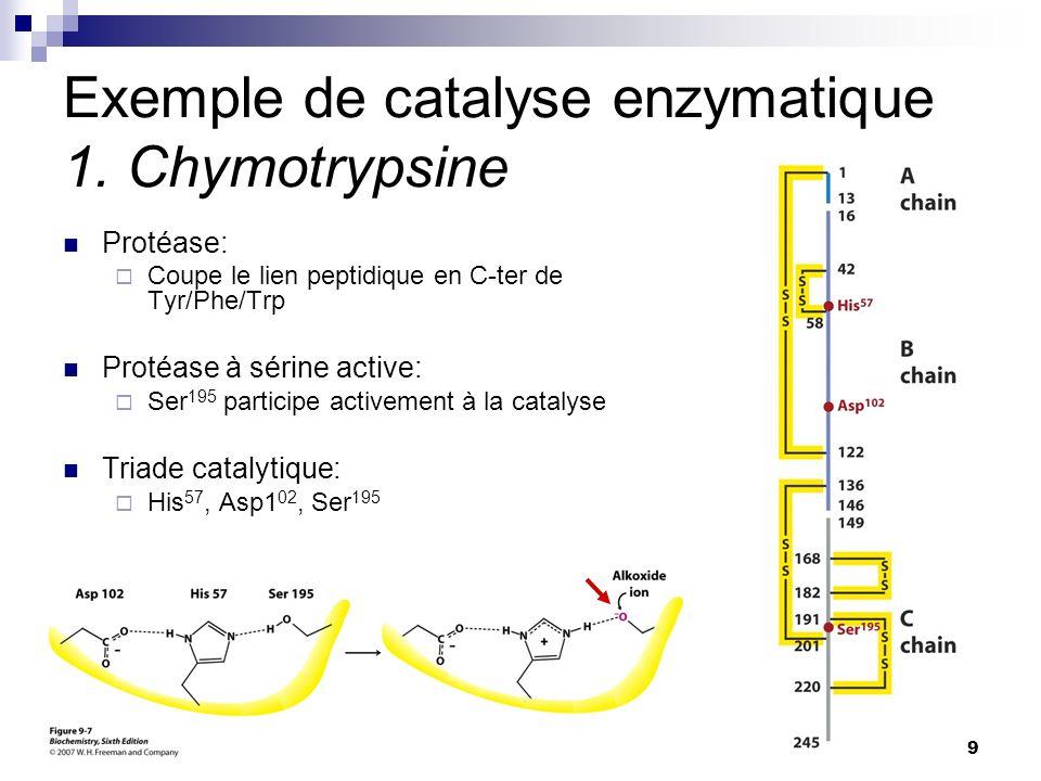 CHMI 2227 - E.R. Gauthier, Ph.D.9 Exemple de catalyse enzymatique 1. Chymotrypsine Protéase: Coupe le lien peptidique en C-ter de Tyr/Phe/Trp Protéase