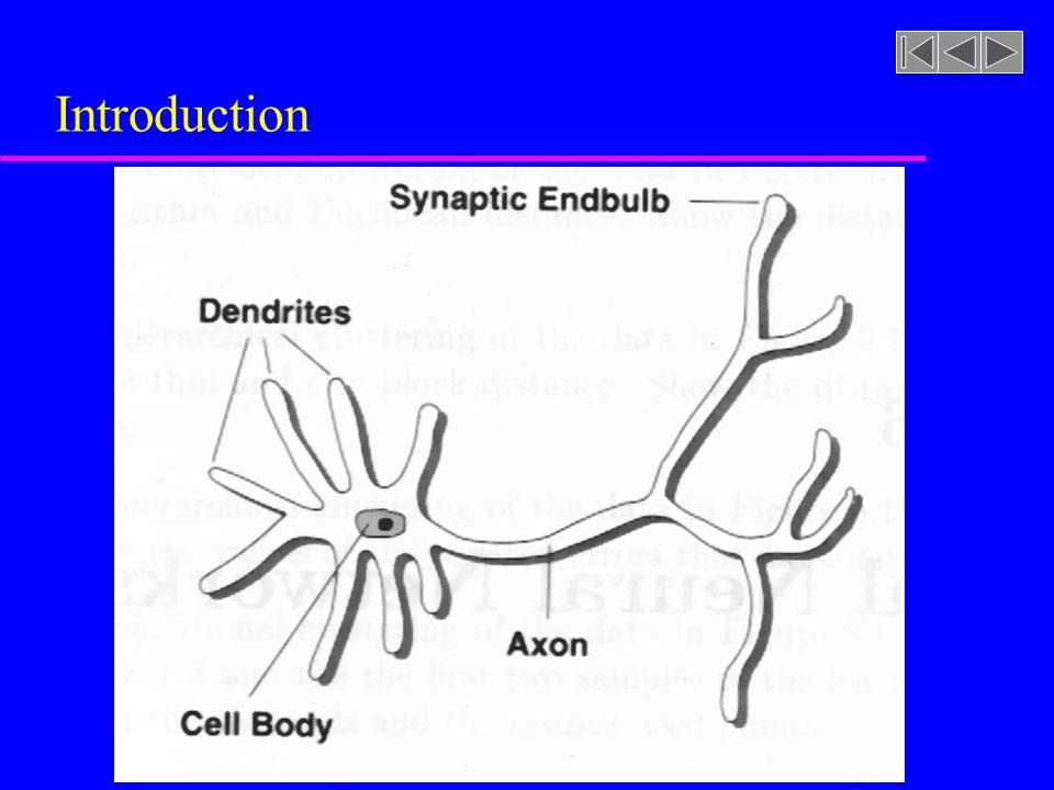u Un neurone reçoit des signaux de plusieurs milliers de dendrites et émet au travers de centaines daxo- nes u Avec le haut niveau de redondance des connexions entre neurones, les performances du cerveau sont robustes u Dans plusieurs régions du cortex cérébral, les neurones sont organisés en couches u Un neurone reçoit généralement des signaux des neurones de la couche adjacente