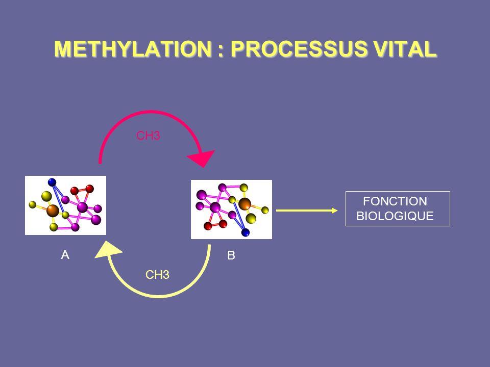 METHYLATION : PROCESSUS VITAL CH3 A B FONCTION BIOLOGIQUE CH3