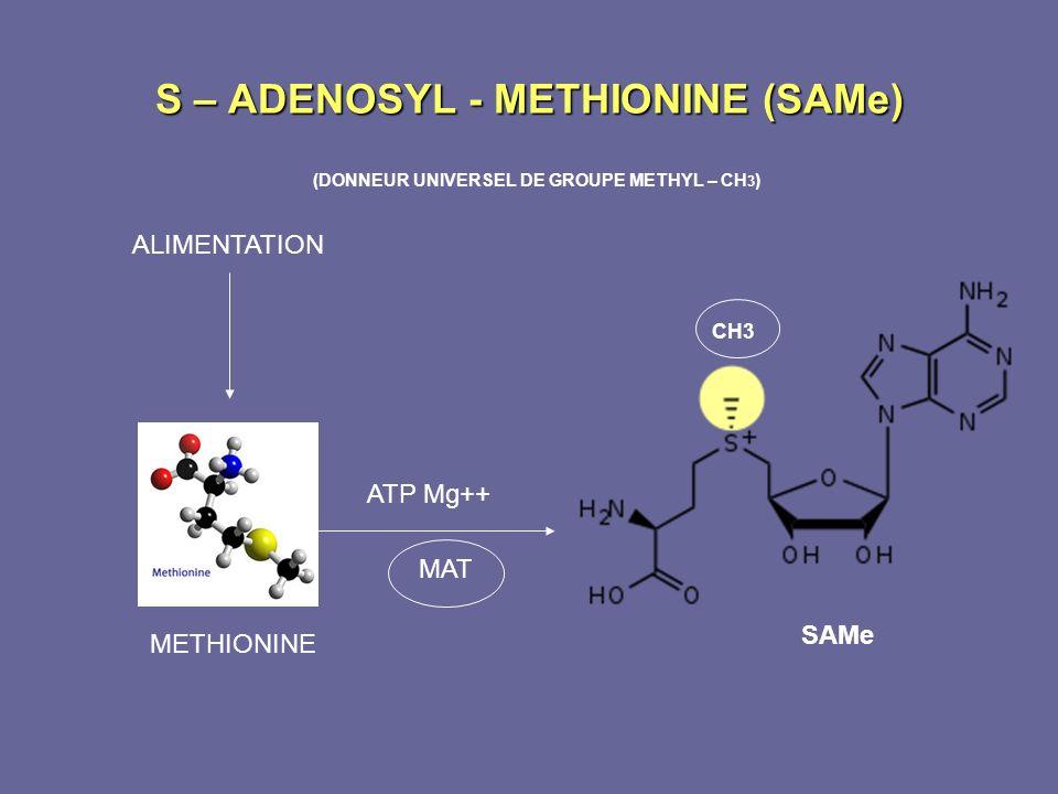 S – ADENOSYL - METHIONINE (SAMe) (DONNEUR UNIVERSEL DE GROUPE METHYL – CH 3 ) ALIMENTATION METHIONINE SAMe CH3 ATP Mg++ MAT