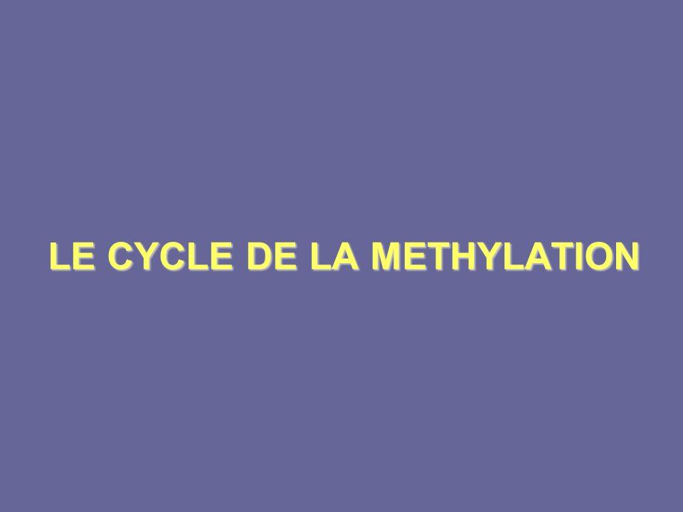 LE CYCLE DE LA METHYLATION