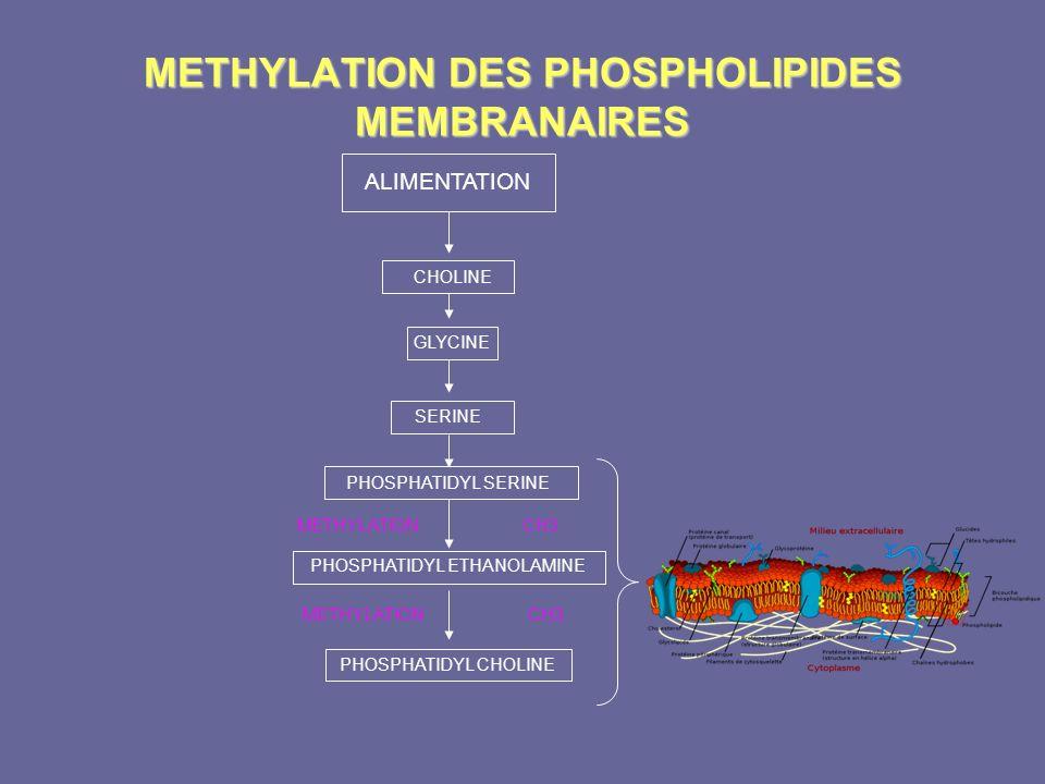 METHYLATION DES PHOSPHOLIPIDES MEMBRANAIRES GLYCINE SERINE METHYLATION CH3 PHOSPHATIDYL ETHANOLAMINE PHOSPHATIDYL CHOLINE METHYLATION CH3 PHOSPHATIDYL