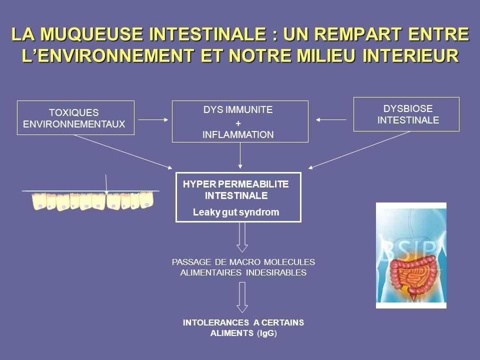 LA MUQUEUSE INTESTINALE : UN REMPART ENTRE LENVIRONNEMENT ET NOTRE MILIEU INTERIEUR PASSAGE DE MACRO MOLECULES ALIMENTAIRES INDESIRABLES INTOLERANCES