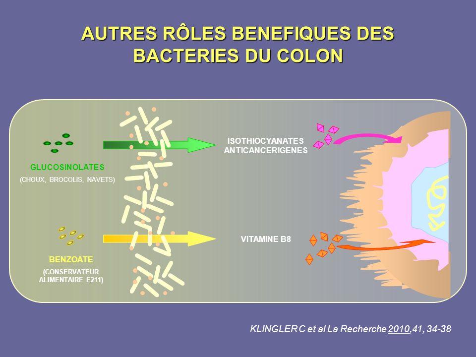 AUTRES RÔLES BENEFIQUES DES BACTERIES DU COLON GLUCOSINOLATES (CHOUX, BROCOLIS, NAVETS) BENZOATE (CONSERVATEUR ALIMENTAIRE E211) ISOTHIOCYANATES ANTIC