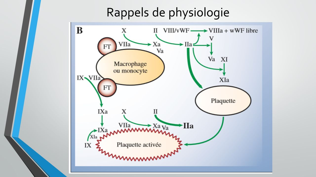 Conclusion: - Pathologies connues pour CIVD + score =diagnostique - Traitement de la cause!!!!!.