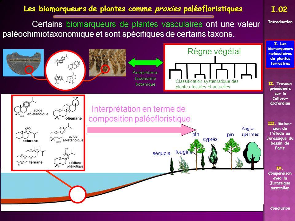 Certains biomarqueurs de plantes vasculaires ont une valeur paléochimiotaxonomique et sont spécifiques de certains taxons. Classification systématique