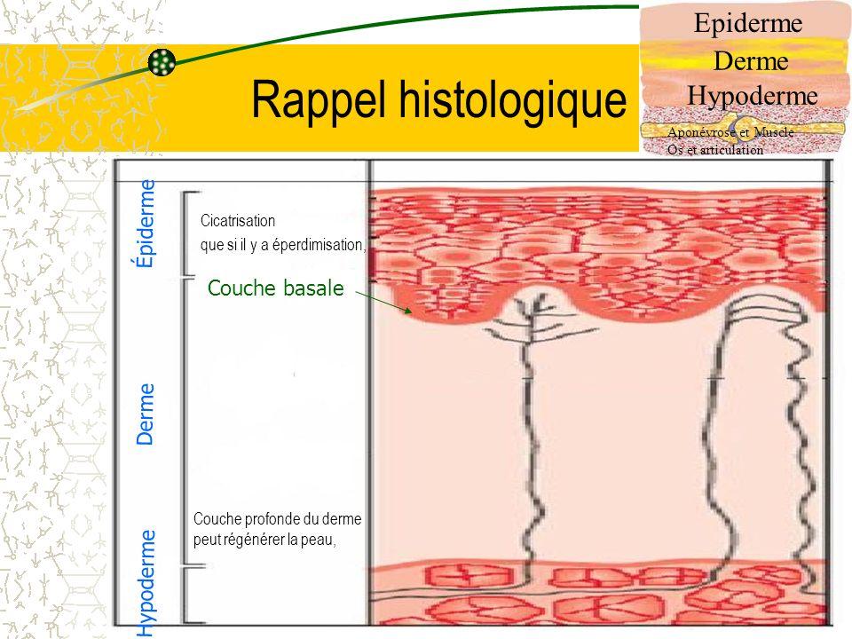 4 Rappel histologique Epiderme Derme Hypoderme Aponévrose et Muscle Os et articulation Épiderme Derme Hypoderme Couche basale Couche profonde du derme