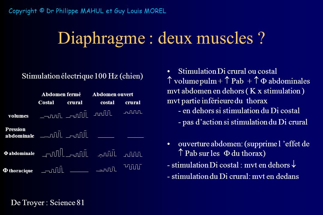 Diaphragme : deux muscles .