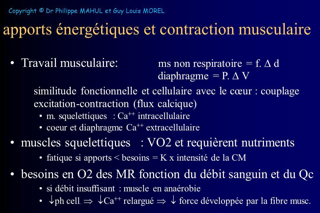 apports énergétiques et contraction musculaire Travail musculaire : ms non respiratoire = f.