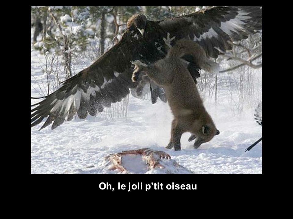Oh, le joli ptit oiseau