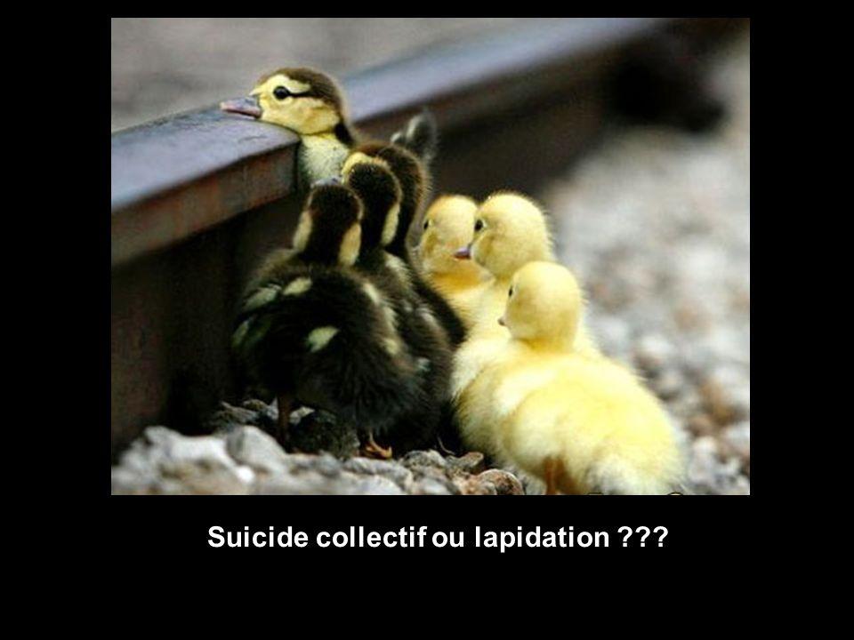 Suicide collectif ou lapidation ???