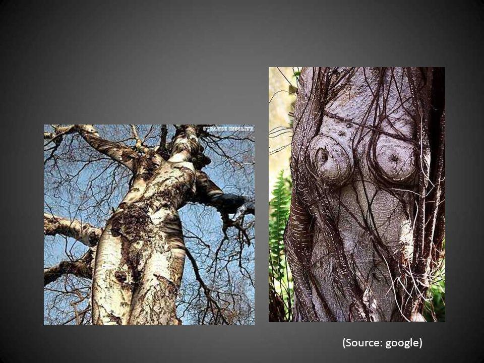 « Les arbres des forêts sont des femmes très belles Dont l invisible corps sous l écorce est vivant.